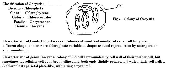 cell envelope and its modifications in hindi