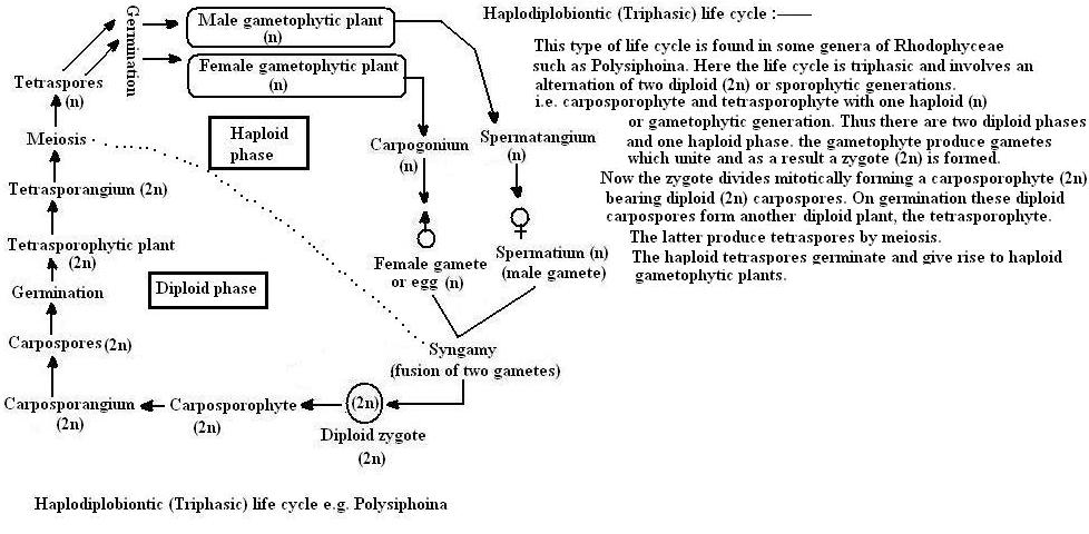 Algae Structure And Reproduction-1126