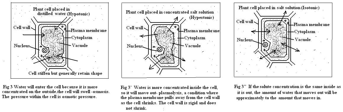 how to make a hypotonic solution